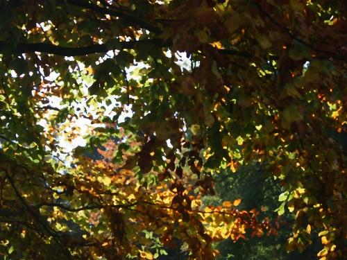 autumn09#4