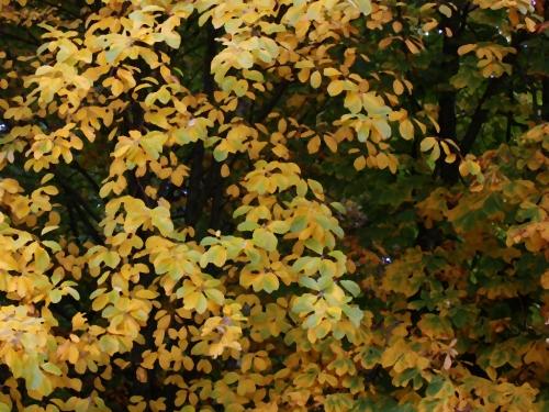 autumn09#5